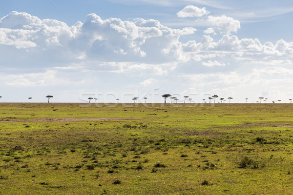 дерево саванна Африка природы пейзаж живая природа Сток-фото © dolgachov