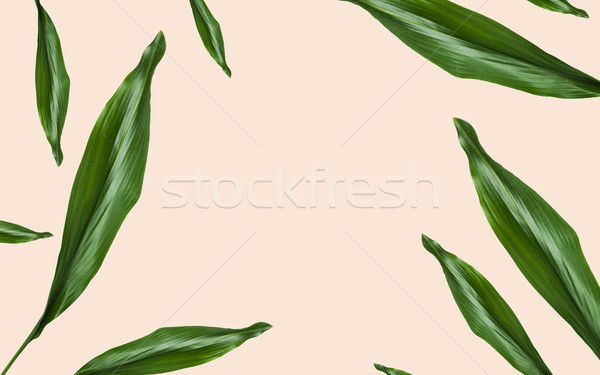 green leaves with blank space on beige background Stock photo © dolgachov