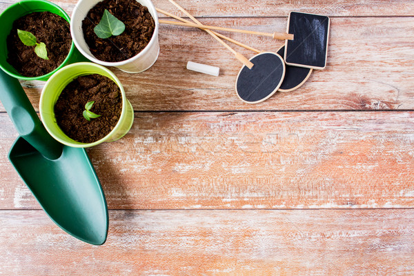 Zaailingen tuinieren tuin tabel Stockfoto © dolgachov