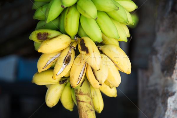 bunch of green bananas at street market Stock photo © dolgachov
