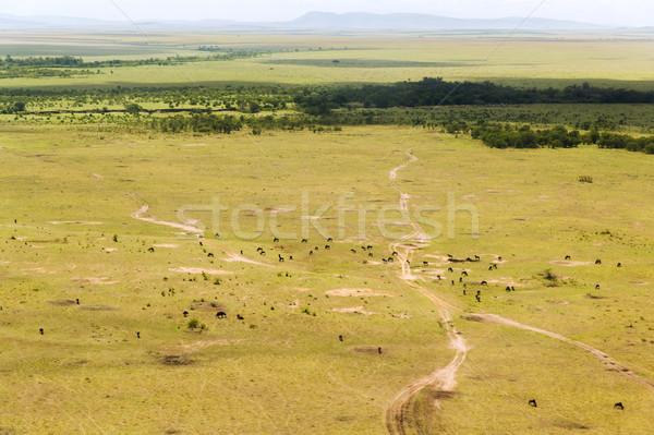 Rezerv savan Afrika doğa manzara yaban hayatı Stok fotoğraf © dolgachov