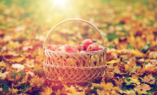 Fonott kosár érett piros almák ősz Stock fotó © dolgachov
