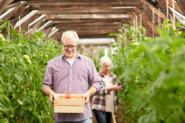 old couple with box of tomatoes at farm greenhouse Stock photo © dolgachov