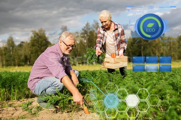 Stockfoto: Vak · wortelen · boerderij · organisch