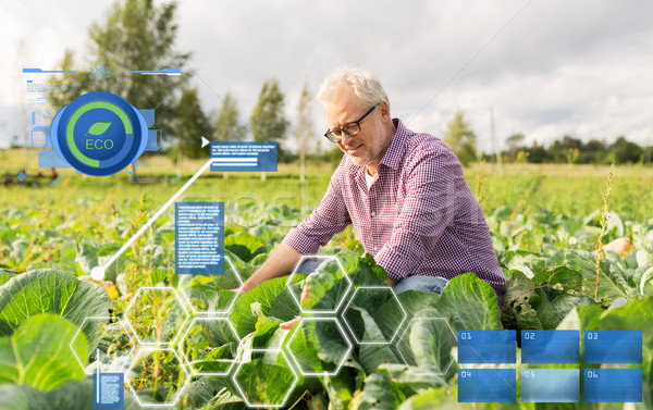 Idős férfi növekvő fehér káposzta farm Stock fotó © dolgachov