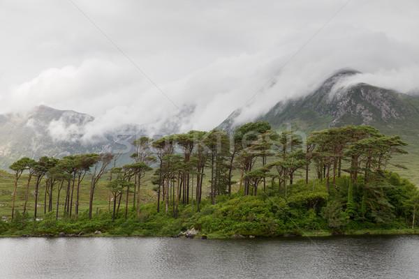 Vista isla lago río Irlanda naturaleza Foto stock © dolgachov