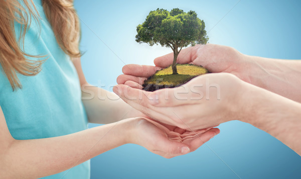 close up of father and girl hands with oak tree Stock photo © dolgachov