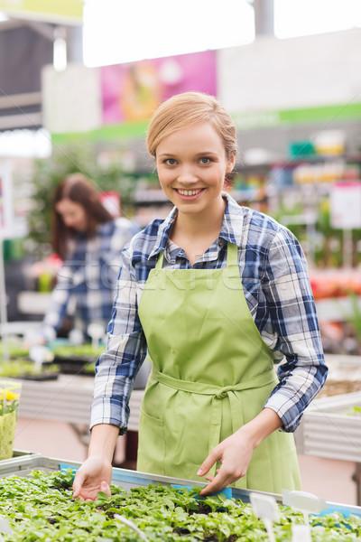 Feliz mujer toma atención planta de semillero invernadero Foto stock © dolgachov
