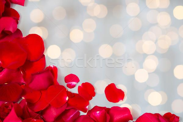 Közelkép piros rózsa szirmok copy space szeretet románc Stock fotó © dolgachov