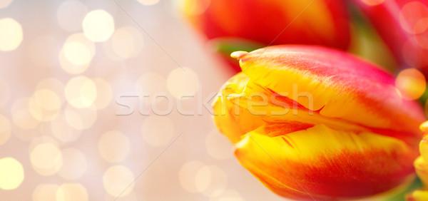close up of tulip flowers Stock photo © dolgachov