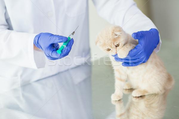 Vétérinaire vaccin chaton clinique Photo stock © dolgachov