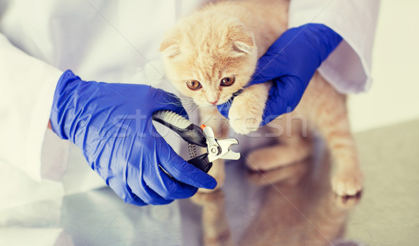 close up of vet with clipper cutting cat nail Stock photo © dolgachov