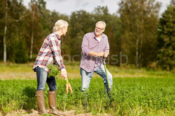 Casal de idosos pá cenouras fazenda Foto stock © dolgachov