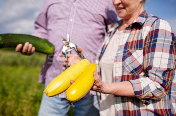 senior couple with squashes and secateurs at farm Stock photo © dolgachov