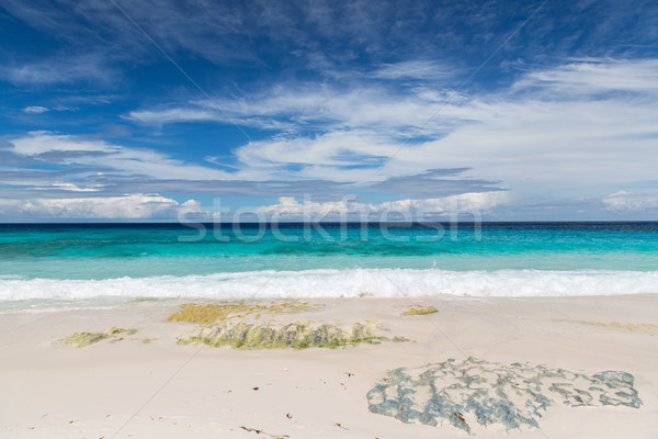 beach in indian ocean on seychelles Stock photo © dolgachov