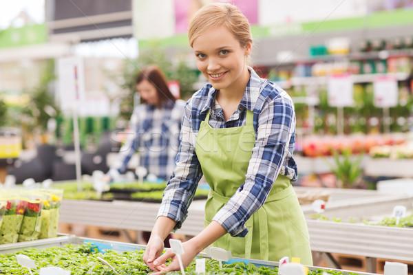 Boldog nő elvesz törődés palánta üvegház Stock fotó © dolgachov