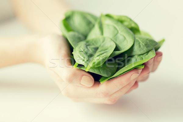 Közelkép nő kezek tart spenót egészséges étkezés Stock fotó © dolgachov