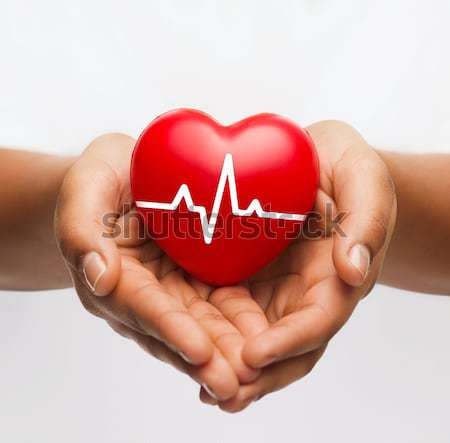 female hands holding heart with ecg line Stock photo © dolgachov