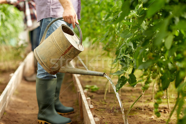 senior man with watering can at farm greenhouse Stock photo © dolgachov