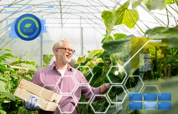old man picking cucumbers up at farm greenhouse Stock photo © dolgachov