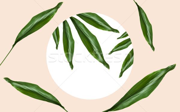 Folhas verdes quadro bege natureza orgânico modelo Foto stock © dolgachov