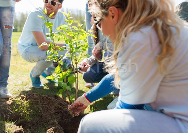 Csoport önkéntesek ültet fa park önkéntesség Stock fotó © dolgachov