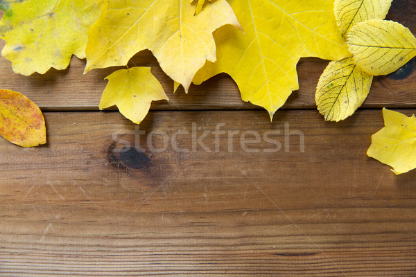 close up of many different fallen autumn leaves Stock photo © dolgachov