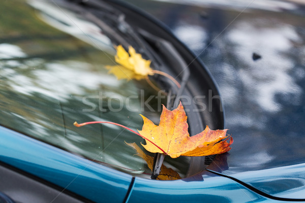 Stock photo: close up of car wiper with autumn leaves