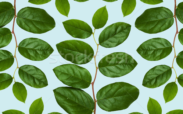 Grüne Blätter blau Natur botanik Blatt Stock foto © dolgachov