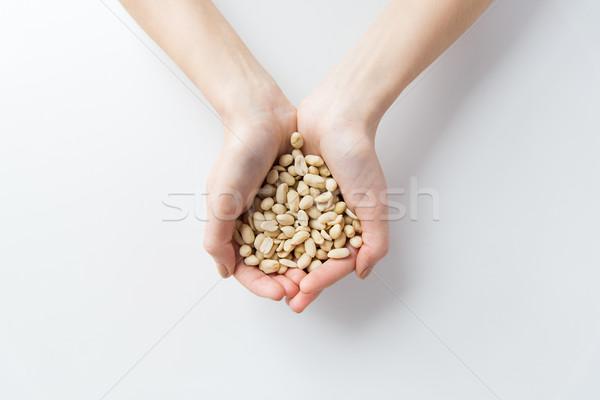 Frau Hände halten geschält Erdnüsse Stock foto © dolgachov