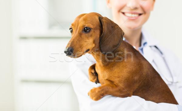 獣医 ダックスフント 犬 クリニック 薬 ストックフォト © dolgachov