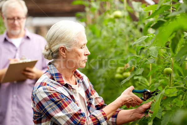 senior woman with garden pruner at farm greenhouse Stock photo © dolgachov