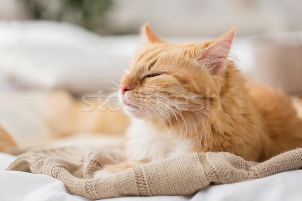 Rouge chat dormir couverture maison hiver Photo stock © dolgachov