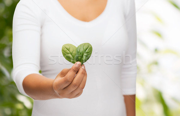 Stock photo: closeup woman hand with green sprout