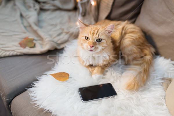 Kırmızı kedi kanepe ev Evcil Stok fotoğraf © dolgachov
