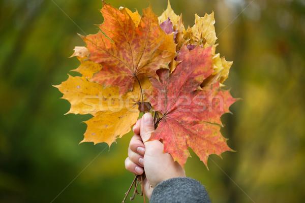 Foto stock: Mulher · mãos · outono · bordo · folhas