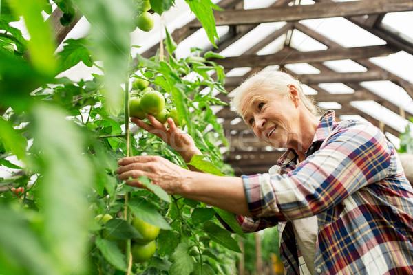 Altos mujer creciente tomates granja invernadero Foto stock © dolgachov