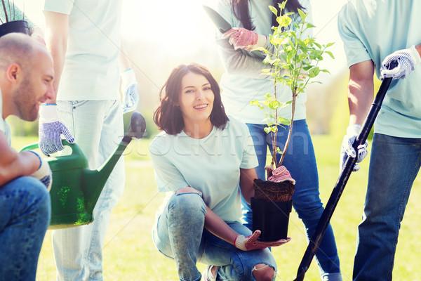 Grup ağaç park gönüllü Stok fotoğraf © dolgachov