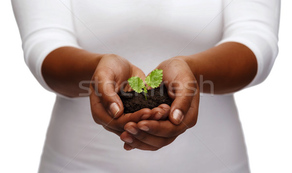 african american woman hands holding plant in soil Stock photo © dolgachov