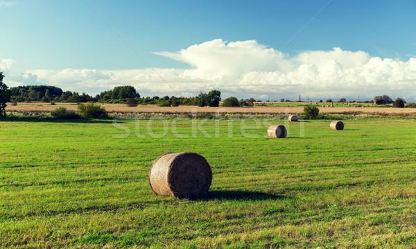 Fieno estate campo agricoltura raccolta Foto d'archivio © dolgachov