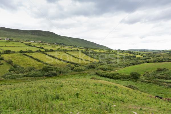 Alanları yol İrlanda doğa Stok fotoğraf © dolgachov
