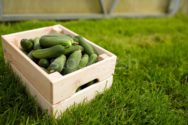 cucumbers in wooden box at summer garden Stock photo © dolgachov