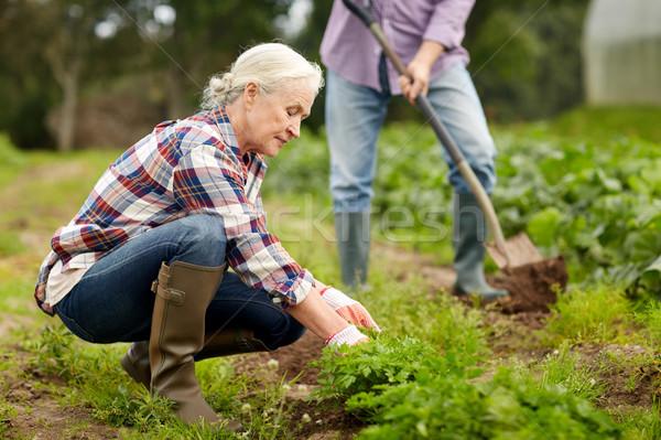 Idős pár dolgozik kert nyár farm gazdálkodás Stock fotó © dolgachov