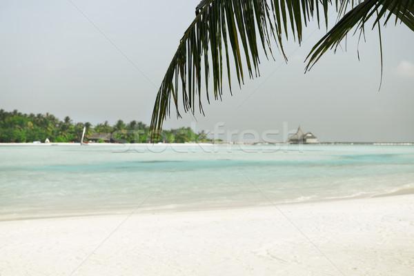 Мальдивы острове пляж пальма Villa путешествия Сток-фото © dolgachov