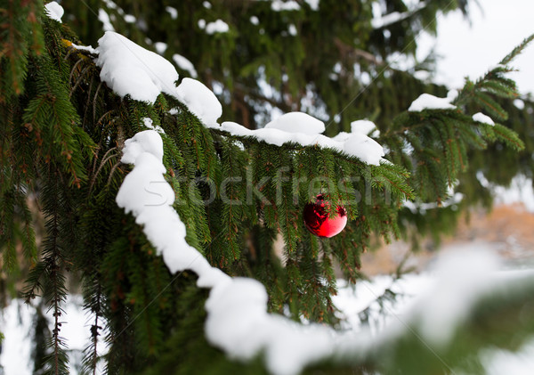 Stock photo: red christmas ball on fir tree branch with snow