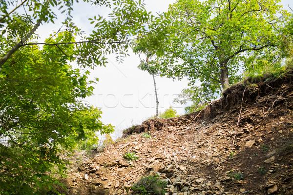 Rupe alberi natura ambiente cielo Foto d'archivio © dolgachov