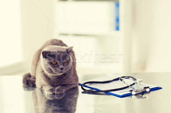 Foto stock: Britânico · gato · veterinário · clínica · medicina