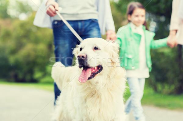 Közelkép család labrador kutya park díszállat Stock fotó © dolgachov