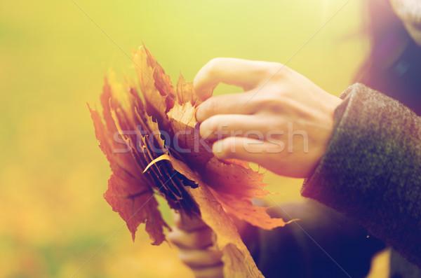 Közelkép nő kezek ősz juhar levelek Stock fotó © dolgachov