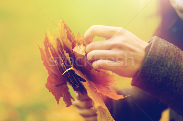 женщину рук осень клен листьев Сток-фото © dolgachov